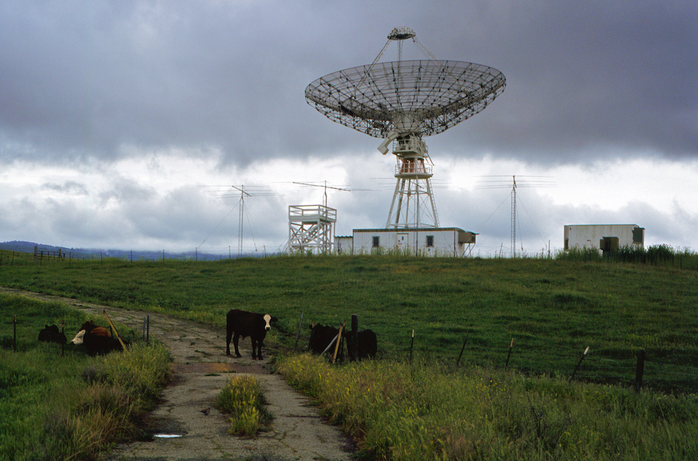 Bovine radio astronomers await the data