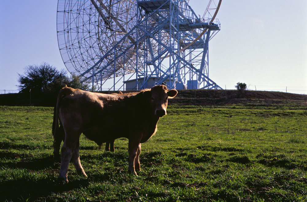 Bovine radio astronomers find your thesis unconvincing