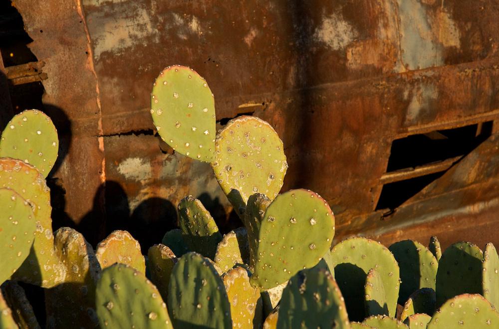 Cactus rocket