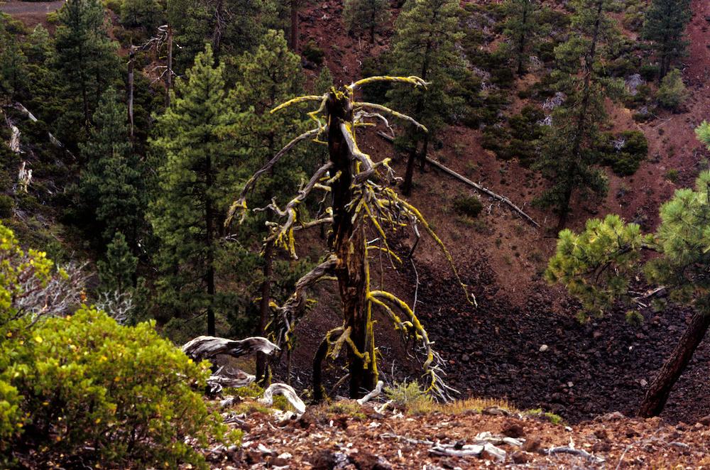 Mossy stumpy