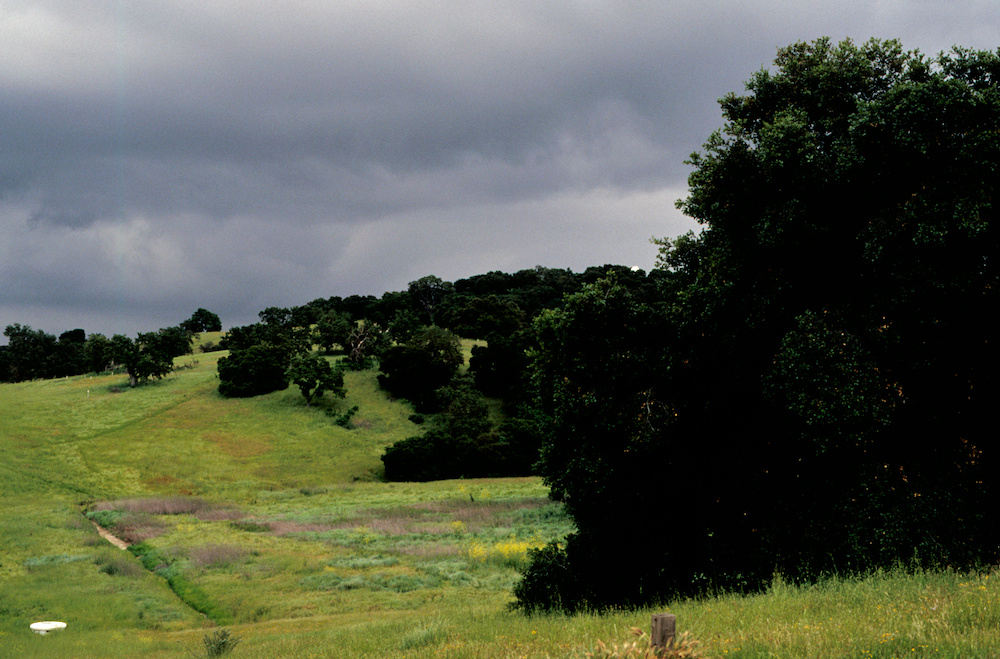 The green hills of Stanford