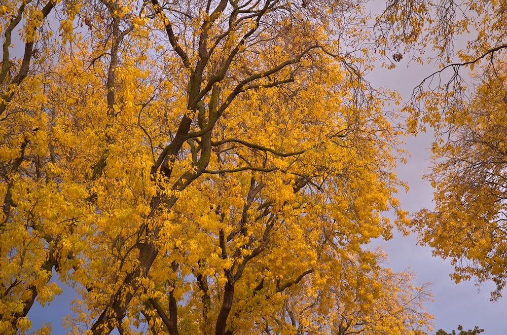 Palo Alto autumn