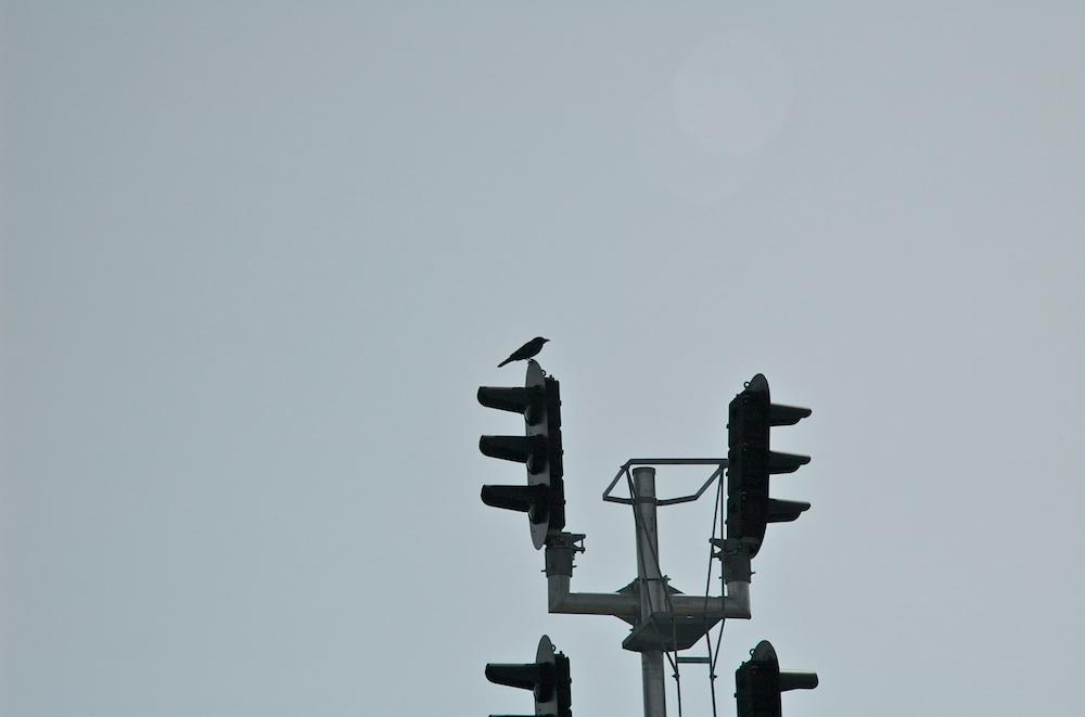 Signal bird