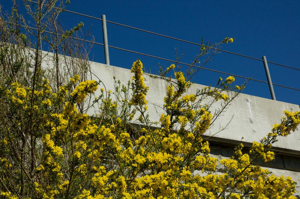Springtime trackside