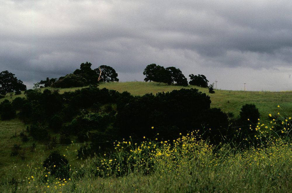 The green hills of Stanford, #2